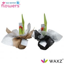 No Water Flowers® Christmas Wrapz