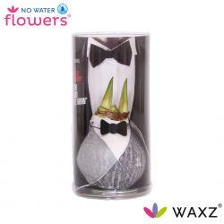 wax amaryllis giletz met bow tie in koker