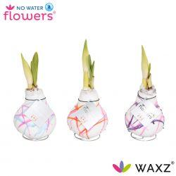 wax amaryllis met strepen art karel appel