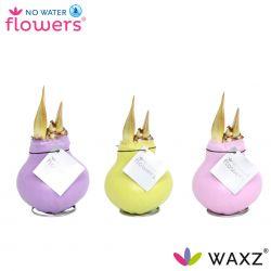 wax amaryllis pastel kleuren