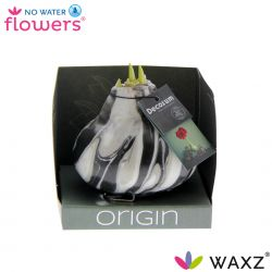 decorum wax amaryllis met art zwart in decorum doosje