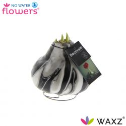 decorum wax amaryllis met art zwart