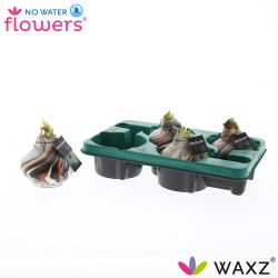 decorum wax amaryllis met art koper in tray