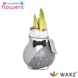 wax amaryllis giletz zwart met bow tie