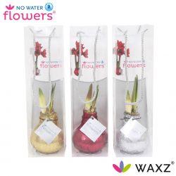 wax amaryllis met glitters in tas
