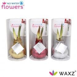 wax amaryllis met glitters in koker