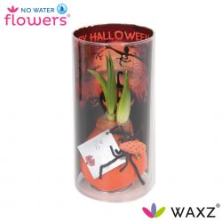 wax amaryllis halloween thema met spin in koker