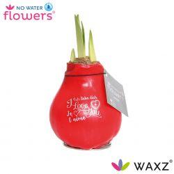 wax amaryllis valentijn print i love you