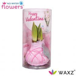 wax amaryllis valentijn roze met strepen art in koker