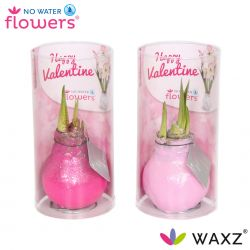 wax amaryllis valentijn roze met glitter in koker