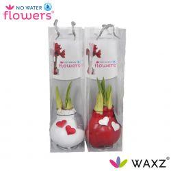wax amaryllis valentijn wit en rood met hartjes in tas