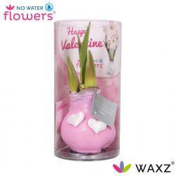 wax amaryllis valentijn pastel roze met hartjes in koker