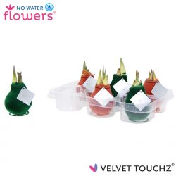 fluweel amaryllis velvet touchz mix dark green terracotta in tray