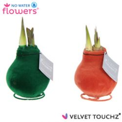 fluweel amaryllis velvet touchz mix dark green terracotta