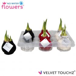 fluweel amaryllis velvet touchz mix zwart, wit, bordeaux in tray