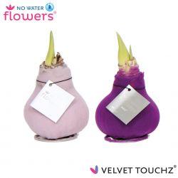 fluweel amaryllis velvet touchz mix lila, paars
