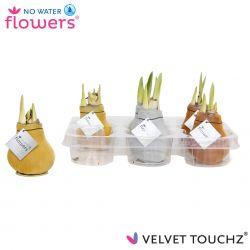 fluweel amaryllis velvet touchz mix metallic goud zilver koper in tray