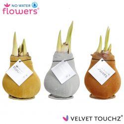 fluweel amaryllis velvet touchz mix metallic goud zilver koper