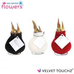 fluweel amaryllis velvet touchz mix zwart, wit, bordeaux