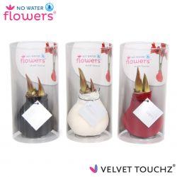 fluweel amaryllis velvet touchz mix zwart, wit, bordeaux in koker