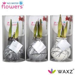 wax amaryllis met strepen zilver art vermeer in koker