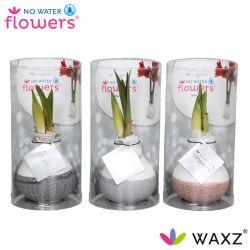 wax amaryllis met dip natuurlijke tinten in koker